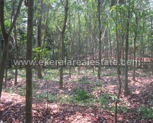rubber land plots for sale in attingal trivandrum kerala land sale