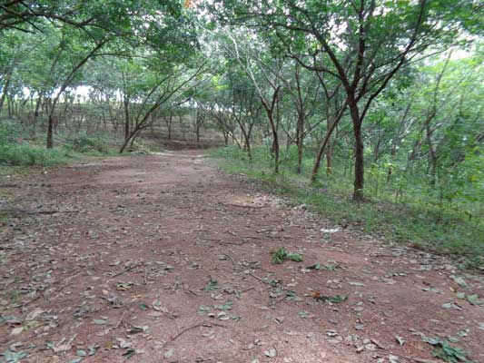 Pothencode real estate 5 acres land for sale near for Land for sale in kerala