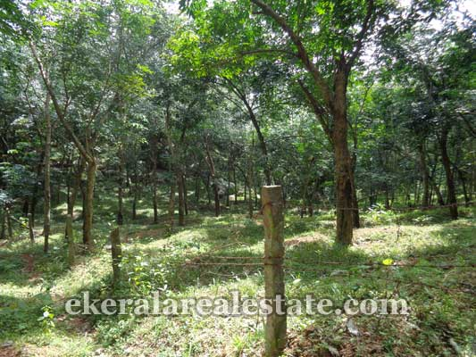Residential and Commercial Land at Perumkadavila Trivandrum Properties kerala real estate