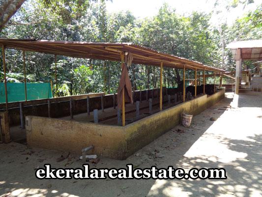 low-budget-houses-plots-sale-in-venjaramoodu-trivandrum-venjaramoodu-real-estate-kerala