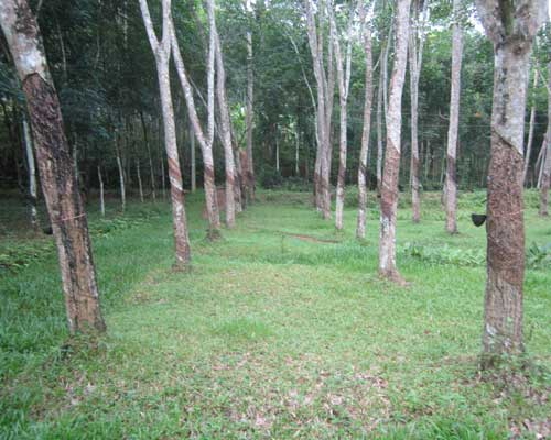 Land Sale at Neduvathoor Kottarakkara Kollam Kerala Kottarakkara Real Estate Kerala Properties